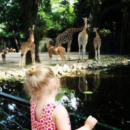 Sozialstudie Zoo