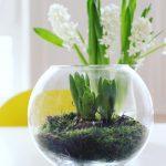 Wir holen uns mal ein bisschen Grün ins Haus - Hyazinthen im Glas