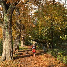Kurz mal weg im Herbst: Familienurlaub im Harz