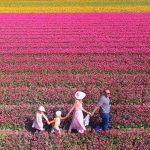 Ausflug zu den Tulpen nach Holland - wo sind die schönsten Tulpenfelder?