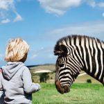 Unsere Südafrika-Reise mit den Kindern – Vorbereitung, Organisation, Must-Knows