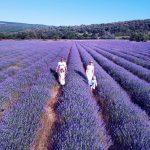 Oh, du schöne Provence - Ausflüge mit Kindern und Tipps für einen entspannten Familienurlaub