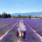 Ein Sommerferien-Roadtrip, Warnung vor Corsica Ferries und die schönsten Lavendelfelder in der Provence